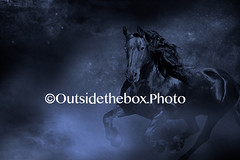 Friesian Horse Magic (outsidetheboxphoto1) Tags: horses france fairytale photoshop magic blackbeauty blackhorse horselover creativephotography magichorse friesianhorse blackhorses bigblackhorse horselovers fantasyphotography fantasyhorse blackfriesian