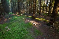 20151105IMG_2128_Kuusik (Enn Raav) Tags: forest estonia spruce mets sgis kuused kuusk vanagram halinga