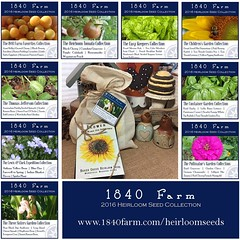 "I just finished putting together the second round of our 2016 Heirloom Seed Collections.  They're in our shop and ready to ship out bright and early on Monday morning.  I'd love to know which of these nine collections is your favorite.  Which one do you l • <a style=""font-size:0.8em;"" href=""http://www.flickr.com/photos/54958436@N05/23552022140/"" target=""_blank"">View on Flickr</a>"