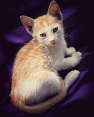 #Streetcat (zovaerkaiser) Tags: streetcat streetphotography cat catlover eye beautifuleye cute cuteness streetphotographer streetphotographylover bangladeshi colour black violet dark photographyeveryday photographyislife photographyislifestyle