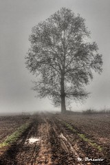 HDR - Fog (MBorsatto61) Tags: parcoagricolosudmilano parco park herbst fog nebel niebla туман hdr italy agricolo sud milano 1855 canoneos 600d