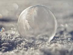 Frozen Bubble II  (in Explore) (Vintage lens lover) Tags: manualfocus zeiss pancolar schärfentiefe bokeh schnee seifenblasen bubble