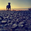 Good boy #benheinephotography #dog #chien #friend #bestfriend #ami #pet #animal #photography #photographie (Ben Heine) Tags: benheinephotography photography composition light smartphone nature landscape beauty beautiful photo photographie art ifttt instagram benheine horizon