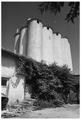 Balchik, Bulgaria, Aug. 2016 (skumata) Tags: balchik bulgaria minolta x700 rokkor ilford film analog august filter bird shadow old seagull pan f
