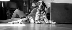 Vitto (mavricich) Tags: casa perro mascota dálmata olympus old film fomapan foma fomadon f35 interior monocromo