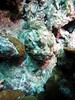 Find the fish (Wim Bollein) Tags: fish animal scorpionfish camouflage underwater underwaterparadise scuba diving bluewaters ocean bonaire dutchcaribbean caribbean windsock uwphotography