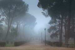 Misty morning (maguialm) Tags: foggy fog trees morning winter nature park pine niebla arboles pinos madrid spain d5500 nikond5500 nikkor 1855 nikkor1855 elpardo lamp cold misty moody fogg chilly dark blue soft solitude view weather invierno way ambience dream city town green