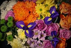 Colour burst (radleyfreak) Tags: flowers iris blue chrysanthemums yellow white roses orange pink bunch texture