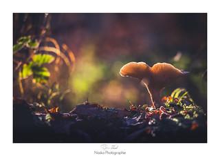 Ho coeur de champignon