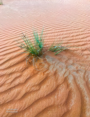 desert (MrAlnaqbi) Tags: mralnaqbi desert landscapes llandscape like orange emirates emirets uae green
