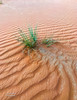 desert (MrAlnaqbi) Tags: mralnaqbi desert landscapes llandscape like orange emirates emirets uae green