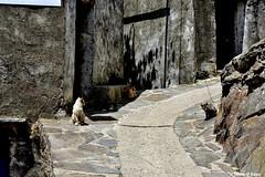 Cuatro gatos. (Howard P. Kepa) Tags: extremadura caceres lashurdes elgasco gatos rocas casas pueblo