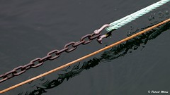 Ring and chain in black water (patrick_milan) Tags: rope cordage aussière accastillage buoy bouée flotteur hublot porthole bout taquet latch poulie pulley réa palan cloche bell hawser compass hélice propeller rudder safran gouvernail snap hook mousqueton manille oarlock shackle buoyant saariysqualitypictures ring anneau