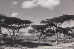 Ethiopia 1952 (Bury Gardener) Tags: bw blackandwhite old oldies ethiopia africa 1950s 1952 snaps