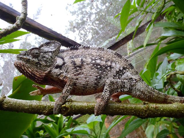 Madagascar3 - 068
