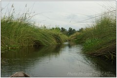 DSC08675PJ_XNV (http://phj.bookfoto.com/) Tags: botswana afrique okavango philippe jubeau delta