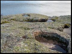 cupule (LUDOVIC. R) Tags: cupule forez loire condamine saint victor olympus e m 10 zonlai 25mm 18