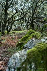 El Cerro San Cristóbal - Almonaster la Real 2017 (Julián Ro Di) Tags: senderismo huelva sierraonubense paisajes vida naturaleza lugar sonya900 50mm verde