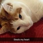 #love #cat thumbnail