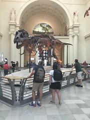 Sue the T rex (Tym) Tags: chicago museum skeleton fossil dinosaur fieldmuseum tyrannosaurusrex tyrannosaur fieldmuseumofnaturalhistory suethetrex