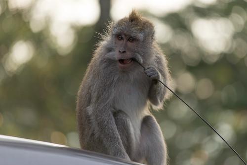 Der Affe auf dem kalten Jeep-Dach