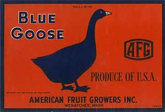 "Blue Goose • <a style=""font-size:0.8em;"" href=""http://www.flickr.com/photos/136320455@N08/21480311701/"" target=""_blank"">View on Flickr</a>"