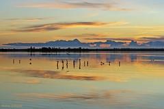 Tramonto sul lago (Darea62) Tags: sunset massaciuccoli tuscany birds clouds reflections lipu oasi versilia landscape skyscape skyporn tramonto paesaggio toscana massarosa