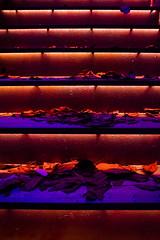 Stairway to heaven (Cortez_CRO) Tags: leaves club stairs heaven osijek croatia clubbing stairway nightlife q raj hrvatska jesen qclub lisce stepenice