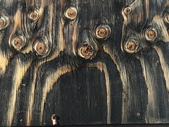 Eerieness I (EyelandGirl) Tags: wood design eerie ghosts barnboard