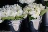 Wedding Details (Heidi Zech Photography) Tags: wedding detail weddings weddingphotography detailshots