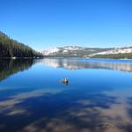"Tenaya Lake <a style=""margin-left:10px; font-size:0.8em;"" href=""http://www.flickr.com/photos/14315427@N00/22942972503/"" target=""_blank"">@flickr</a>"