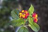 Autumn Flowers أزهار الخريف (Saeed Nassbeh) Tags: flowers flower amman jordan fallflowers زهرة الأردن خريف ازهار أزهار عمّان الخريف الهواءالطلق