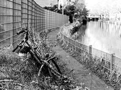Inge Hoogendoorn (ingehoogendoorn) Tags: blackandwhite water bike bicycle landscape cityscape zwartwit streetphotography bikes blacknwhite sadbikes dutchlandscape shallowdepthoffield oldbike sadstuff bikewreck dutchbike straatfotografie dutchbikes forgottenbike sadstuffonthestreet
