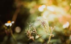 Autumn... (tuanduongtt8018) Tags: