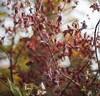winter edge 2z (duncan!) Tags: leica m240 garden autumn winter abstract extreme crystalworld