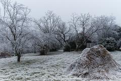 Z16_3999 LT (Zoran Babich) Tags: winter frost zagreb croatia hrvatska cityofzagreb hr