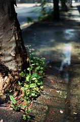rain stopped (Steve only) Tags: konica hexar rf minolta mrokkorqf 12 f40mm 402 f2 40mm rangefinder fujifilm 富士業務紀錄用カラーフィルム100 100 film epson gtx970 v750 snaps city rain
