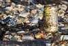 El Abandono 05 (Alejandro...) Tags: algas basura cocacola deteriorado ensayo lata oxido ushuaia