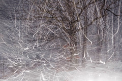 snow (sedregh (off for some days)) Tags: doubleexposure doppelbelichtung oak eiche schnee snow winter