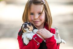Katie Belle (Thomas Hawk) Tags: america byron byronhotsprings california kate usa unitedstates unitedstatesofamerica beagle dog puppy fav10 fav25 fav50