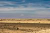 KNA_7547 (koorosh.nozad) Tags: iran persia persien kavirnationalpark nationalpark kavir semnan semnanprovince qasrebahramcarvanserai desert saltsea kashan isfahanprovince caravanseraimaranjab caravansarai caravansaray caravansaraymaranjab ir