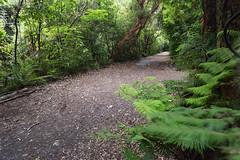 IMG_6438.jpg (Brendon & Keryn) Tags: zealandia summer newzealand northisland wellington