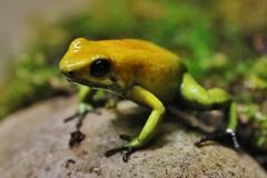 Frosch - Frog (Hugo von Schreck) Tags: hugovonschreck frog frosch canoneos5dsr tamron28300mmf3563divcpzda010
