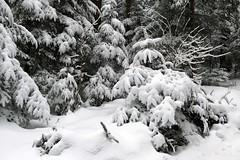 Wald im Winter (Martinus VI) Tags: grosshöchstetten möschberg winter winterlandschaft hiver schnee nieve snow neige kanton de canton bern berne berna berner bernese schweiz suisse svizzera suiza switzerland y150222 martinus6 martinusvi