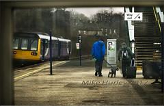 Chinley Hair.  Explored 01-02-2017. (-Metal-M1KE-) Tags: chinley peakdistrict highpeakdistrict 142 142058 people dog tedheathseyebrows station platform waitingroom
