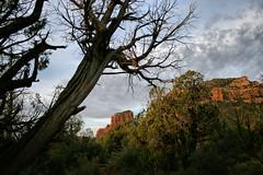 Sunrise,  Sedona, Arizona (nikname) Tags: trees bellrock sedona arizona sunrise redrocks arizonausa arizonaredrocks bellrocksedonaarizona daw