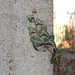 Jaro (bbara155) Tags: plant