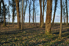 Schlosspark Ostrau (p h o t o . w o r l d s) Tags: schlosspark ostrau winterlinge frühblüher natur nature sigmadp2m