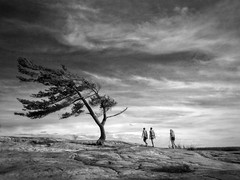 Lonely Pine (craig_schenk) Tags: tree nature pinetree lake iphone bw blackwhite people scale landscape clouds sky monochrome