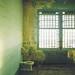 Alcatraz Decay